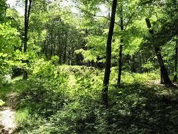 lysning-i-skoven